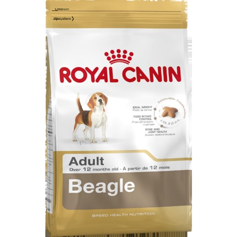 Beagle Adult