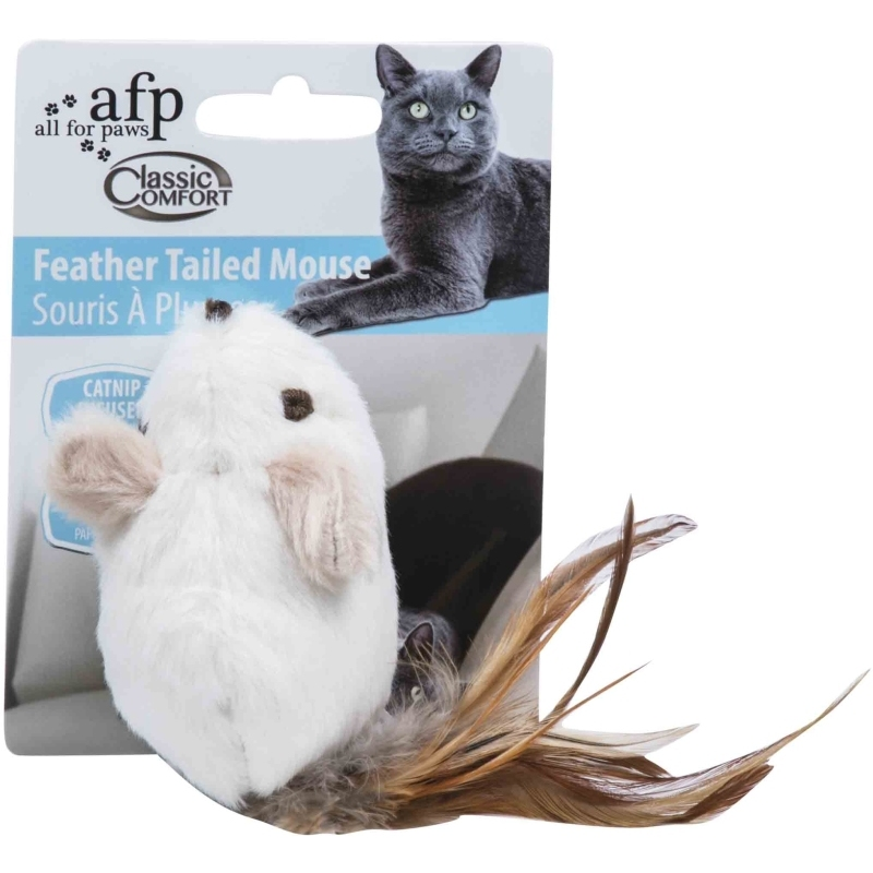 Feather Tailed Mouse