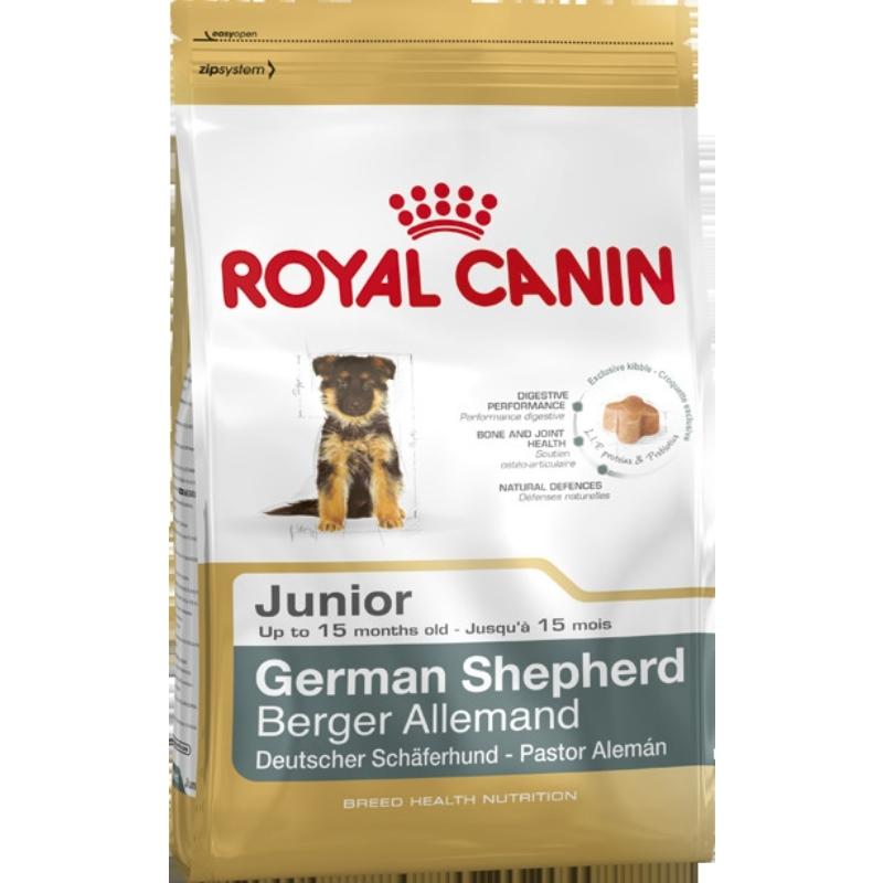 German Shephard Junior