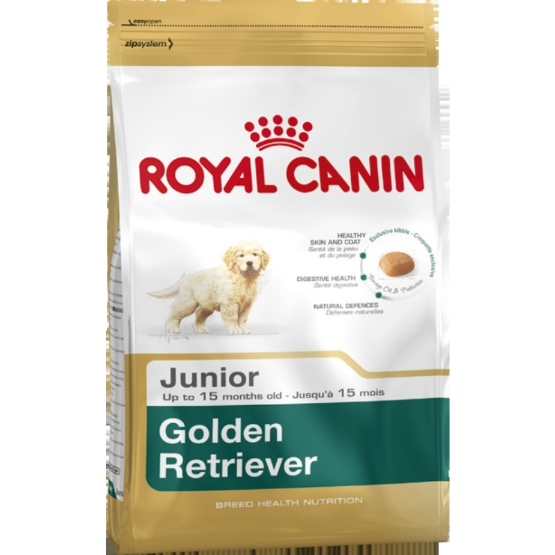 Golden Retriever Junior