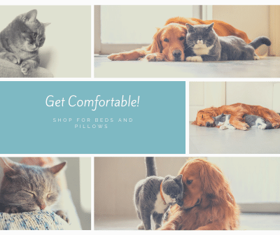 Comfortable Beds for Dogs and Cats on Chew Central.