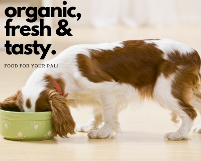 Dog Food Online only at Chew Central