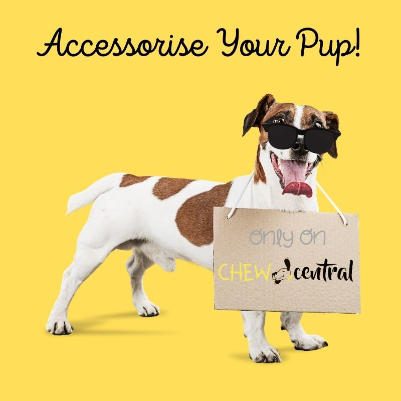 Shop Dog Accessories only on Chew Central