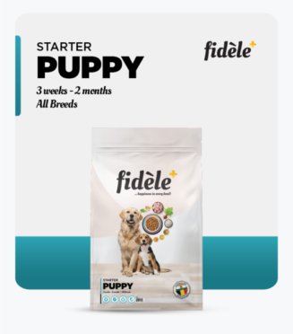 Fidele- Starter Puppy